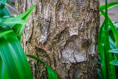 Closeup shot of tree trunk Royalty Free Stock Photography
