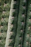 Closeup of green tropical plant. Cactus Stock Photography