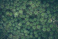 Closeup of green tropical plant. Cactus Stock Images