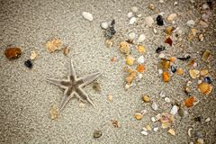 Starfish and shells on  Sand. Closeup shot of a whole starfish and some mostly broken shells on a sandy beach Stock Photos