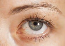 Closeup shot of woman eye with makeup Stock Photos