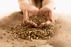 Closeup shot of woman holding mound of golden nuggets in hands Royalty Free Stock Image
