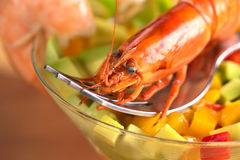 Closeup of Shrimp Stock Image