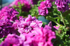 Closeup side view of flowers with artistic shaped bokeh in the b Stock Photography