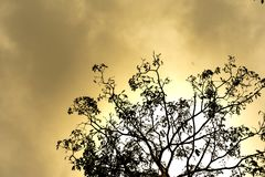 Closeup silhouette of tree background against cloud sky in sunset stock photo