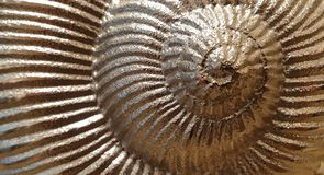 Closeup of a silver shell texture. Wallpaper royalty free stock photography