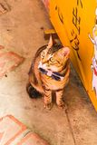 Closeup of single cute cat in front of Shop in Jiufen Village royalty free stock image
