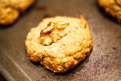 A closeup of a single homemade oatmeal cookie. stock image