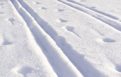 Closeup of ski tracks and animal footprints beautiful colour. Sunset Stock Photo
