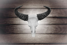 Closeup skull cow on wooden wall Royalty Free Stock Images