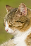 Closeup of a sleeping cat Stock Images