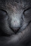 Closeup of sleeping cat face. Macro. Abstract Stock Photos