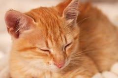 Closeup of sleeping ginger kitten, shallow depth stock image