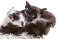 Closeup sleeping kittens Royalty Free Stock Images