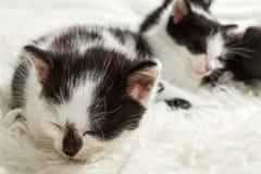 Closeup sleeping small kittens Royalty Free Stock Photo