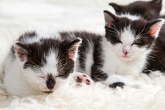 Closeup sleeping small kittens Royalty Free Stock Photography