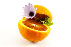 Flower in sliced orange Royalty Free Stock Photography