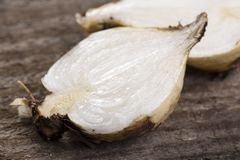 Closeup sliced soap plant root Royalty Free Stock Photography