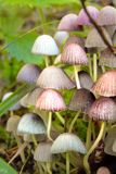 Closeup of small colorful pink mushrooms royalty free stock images