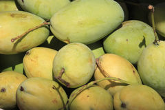 Closeup of a small group of mangoes. Some still green and some more ripe Stock Photography