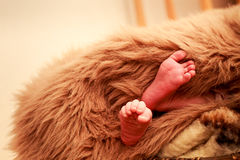 closeup small newborn baby feet Royalty Free Stock Image