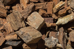 Closeup of Small Pieces of Petrified Wood Stock Images