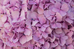 Closeup small pink leaf flowers Royalty Free Stock Photography