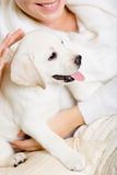 Closeup of small puppy on the hands of woman Stock Photos