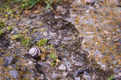 Small snail is crawling along a destroyed road with green grass royalty free stock images