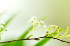 Closeup of small White Flower on Branch. Beautiful Bokeh. Copy S Royalty Free Stock Image