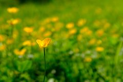 Closeup of a yellow flower in blossom stock image