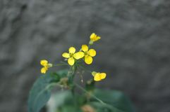 Closeup image of small yellow flowers. stock images