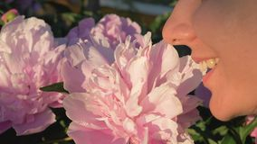 Closeup of caucasian woman sniffing white peonies and enjoying the smell stock video footage