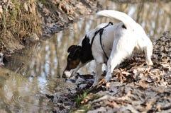 Muddy Dog Stock Photos