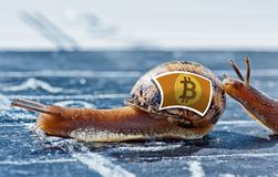 Snail with the colors of Bitcoin currency flag encouraged by another Royalty Free Stock Photos