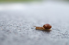 Closeup of snail crawling on wet surface Stock Photo