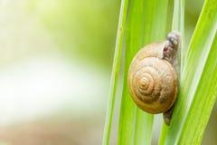 Closeup snail on green leaf. Stock Photos
