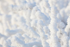 Free Closeup Snow Covered Bush Stock Photo - 75904910