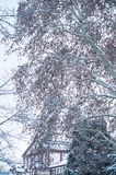 Snow on trees in urban park. Closeup of snow on trees in urban park royalty free stock image