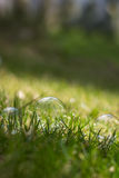 Closeup of soap bubbles on grass Royalty Free Stock Image