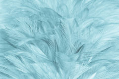 Closeup soft feather Royalty Free Stock Photos