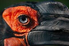 Closeup som skjutas av en Gorndbill Fotografering för Bildbyråer