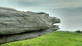 closeup som skjutas av ett trä Fotografering för Bildbyråer