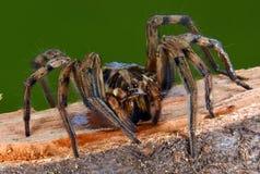 Closeup som skjutas av spindeln arkivfoton