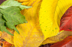 Closeup of some autumnal leaves Stock Images