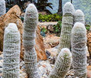 Closeup of some cactus in garden Royalty Free Stock Photography