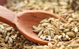 Fennel seeds. Closeup of some fennel seeds with wooden spoon Stock Photography