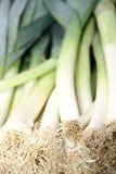 Closeup of some onions stock photo