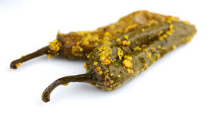 Closeup of spicy indian pickle pepper on white background Royalty Free Stock Photos
