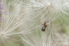 Closeup of a spider Stock Images